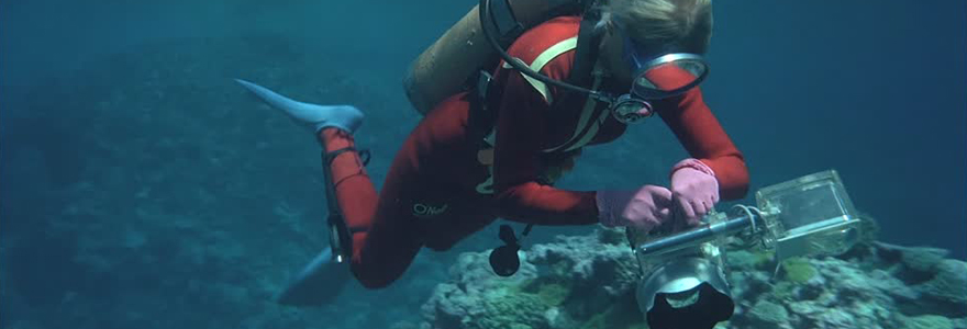 plongeur commercial